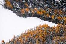 Collezione autunno-inverno